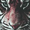 Tigru69